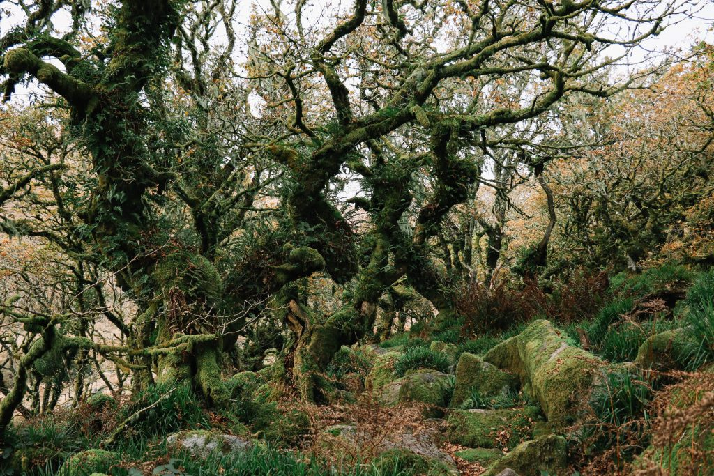 A guide to Dartmoor