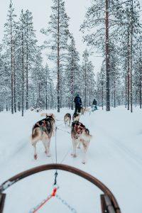 huskie rides finnish arctic