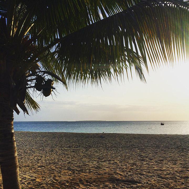 Zanzibar-Gareth-Jenkins-TTT-02